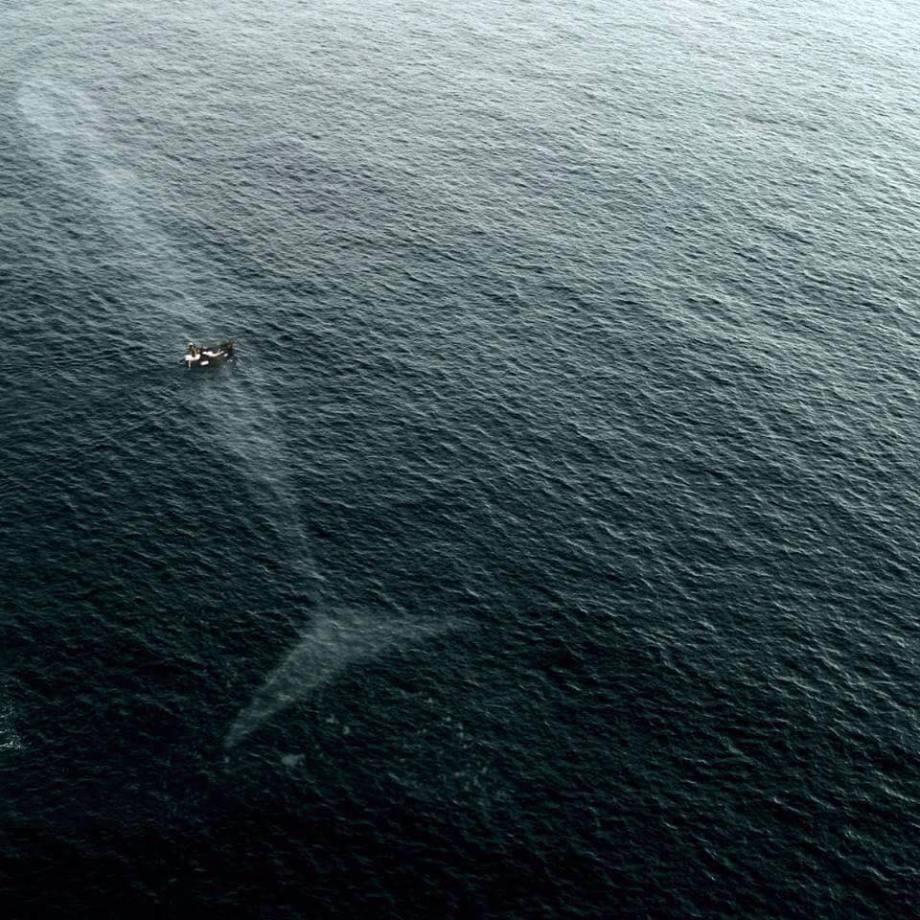 baleine-bleue-2